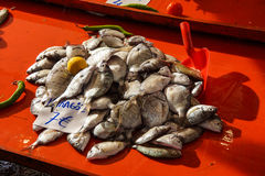 Karagoz (Two Banded Bream) Stock Photo