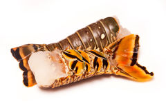 Karaibscy rockowego homara ogony na białym tle obraz royalty free