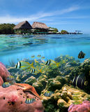 karaibscy sen Obrazy Royalty Free