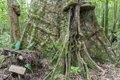 Karaibska dżungla z bujny zieleni egzotycznymi roślinami, piękny wysoki t Zdjęcia Royalty Free