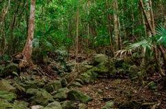 Karaibska dżungla Obraz Royalty Free