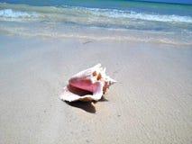 Karaibska koncha Shell Fotografia Royalty Free