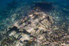 karaibska rafa koralowa Zdjęcia Royalty Free