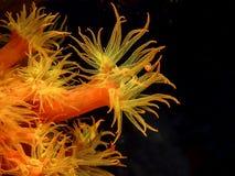 karaibska rafa koralowa zdjęcie stock