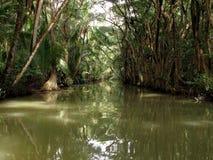 Karaibska rzeka w Dominica wyspie Obraz Royalty Free