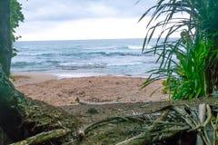 Karaibski Costa Rica oceanu wody plaży raju wakacje drzew las tropikalny Piękny Obraz Stock