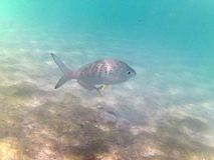 karaibski nurkowy morze tropikalne ryby Obraz Royalty Free