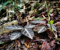Karaibskie rośliny Zdjęcie Royalty Free