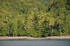 Karaiby plaży lasowi drzewka palmowe zbliżają St Lucia zdjęcia stock