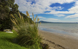 Karaka Bay Beach Auckland New Zealand Stock Photos