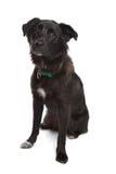 Karakachan Dog Royalty Free Stock Photography