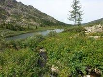 Karakol jeziora w Altai górach 2014 Fotografia Stock