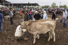 Karakol, Kyrgystan, il 13 agosto 2018: Mercato animale settimanale di domenica in Karakol immagine stock libera da diritti