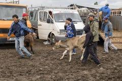 Karakol, Kyrgystan, il 13 agosto 2018: Mercato animale settimanale di domenica in Karakol fotografie stock libere da diritti