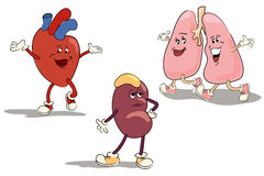 Karakter - vastgestelde interne organen 1 Stock Foto