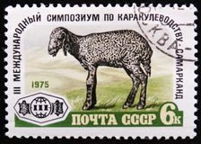 Karakul Lamb and devoted to 3rd International Symposium on karakul production, Samarkand, circa 1975 Stock Image
