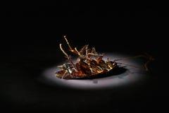 karaluch nie żyje