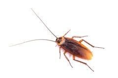 karaluch nie żyje Fotografia Stock