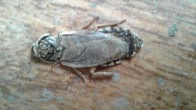 karaluch nie żyje obraz stock