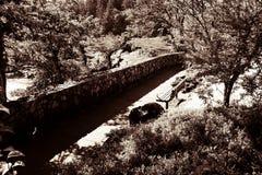 Karambolowanie rzek park w Południowym Oregon obraz royalty free