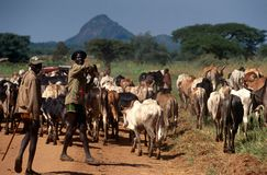 Karamojong有枪的,乌干达牛牧者 库存照片