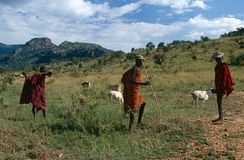 Karamojong cattle herders, Uganda Stock Images