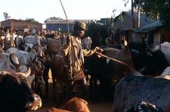 Karamojong cattle herders, Uganda Stock Photography