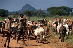 Karamojong nötkreaturherders med vapen, Uganda arkivfoto