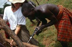 Karamojong Vieh-Hirten, die einen Zaun konstruieren. lizenzfreie stockfotografie
