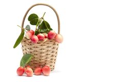 Karanda, Carunda or Christ`s thorn fruits with leaf in basket on white background. stock image