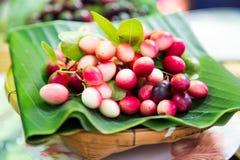 Karanda-Frucht, Carissa carandas L Stockbild