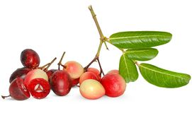 Karanda-Frucht lokalisiert auf Weiß stockbild