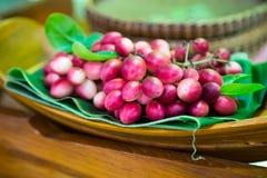 Karanda frukt, Carissacarandas L Royaltyfria Bilder