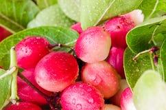 Karanda owoc w Tajlandzkim rynku Obraz Stock
