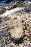 karang cilacap Stock Fotografie