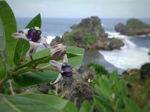 Karang de plage de fleurs Photographie stock