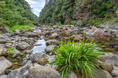 Karanghake Gorge Stock Photography