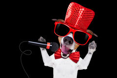 Karaoke singing dog. Jack russell terrier dog isolated on black background singing with microphone a karaoke song in a night club Stock Photography