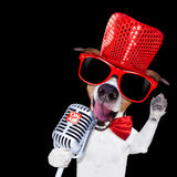 Karaoke singing dog Stock Images
