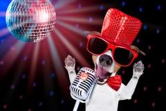 Karaoke singing dog Royalty Free Stock Images