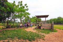 KARAPAN SAPI Stock Photos