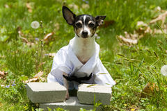 Karaté canin Photographie stock