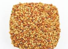Karat seeds Stock Photography