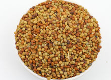 Karat seeds. Karat or kalat indian tropical seed isolate on white Royalty Free Stock Images