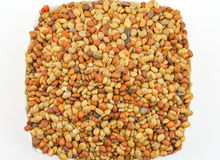 Karat seeds. Karat or kalat indian tropical seed isolate on white Royalty Free Stock Photos