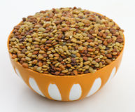 Karat seeds. Karat or kalat indian tropical seed isolate on white Stock Image