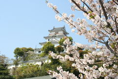 Karatsu castle with sakura Royalty Free Stock Image