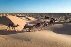 Karawana wielbłądy w piasek diun pustyni Sahara Fotografia Royalty Free