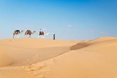 Karawana wielbłądy w piasek diun pustyni Sahara Obraz Royalty Free