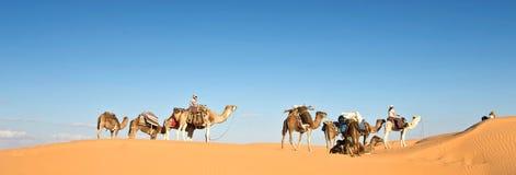 Karawana wielbłądy w piasek diun pustyni Sahara, Południowy Tunezja Obraz Royalty Free